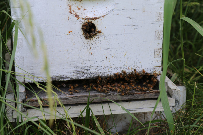 We have hives at the garden right on campus and another hive at the farm a couple blocks from cam...